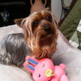 愛犬_ガル